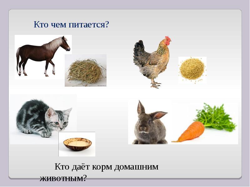 Чем питаются домашние животные в картинках для детей