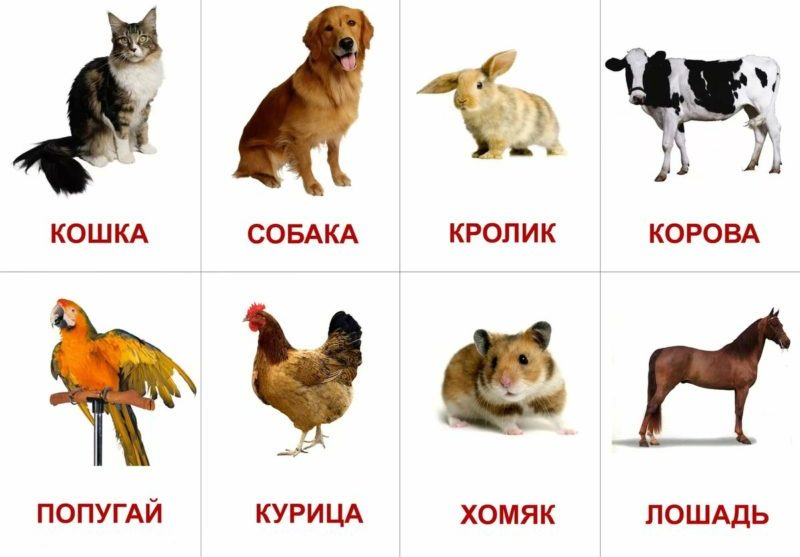 Домашние животные фото с названиями