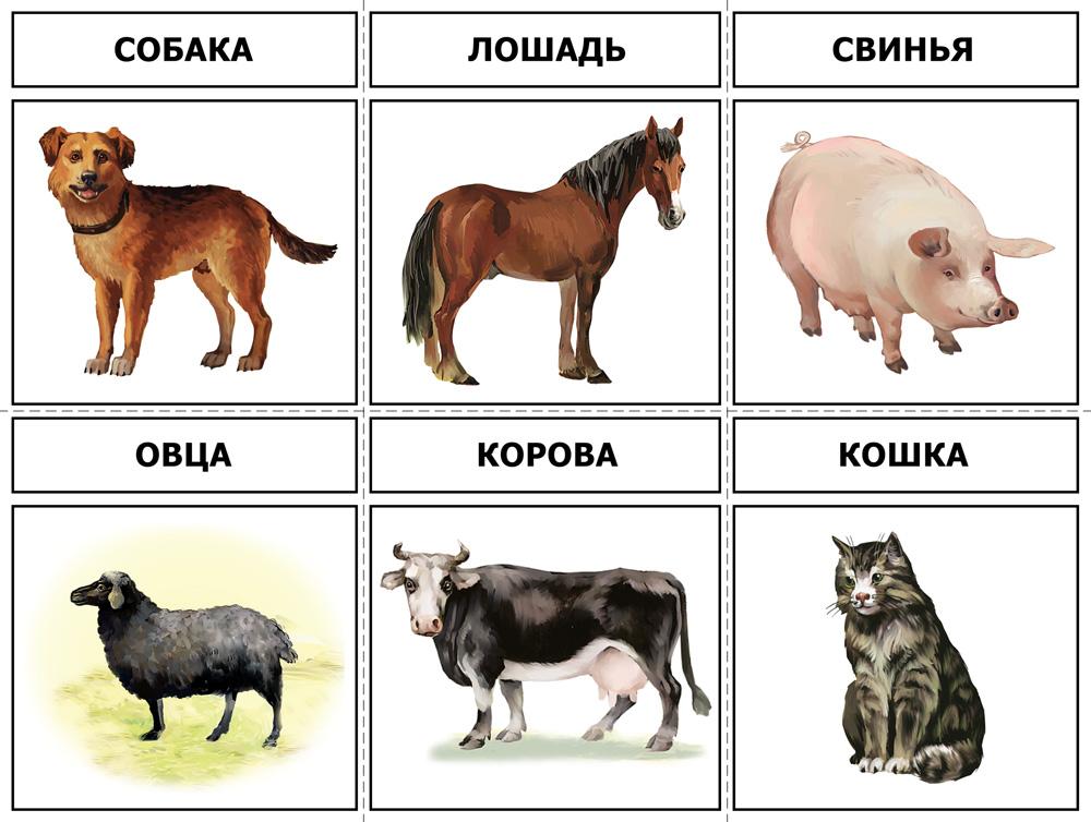 Домашние животные для детей картинки и названия