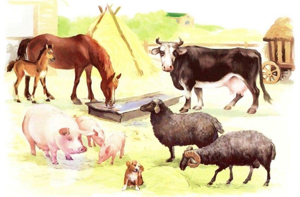 Карточки детенышей домашних животных