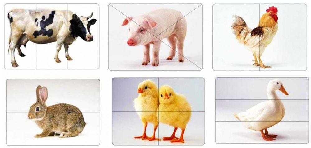 Обучающие карточки домашние животные