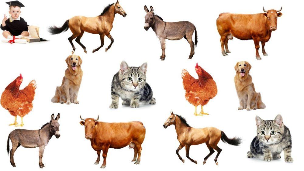 Домашние животные карточки для детского сада