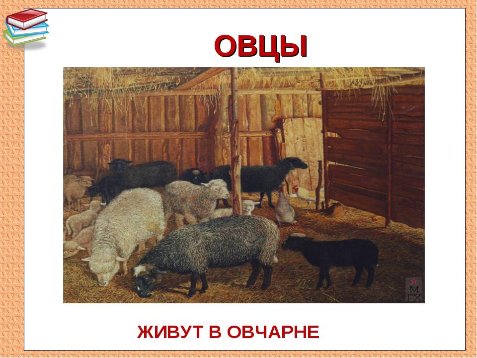 Овцы в овчарне