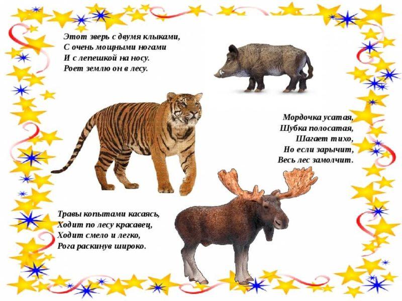 Загадки про животных в картинках