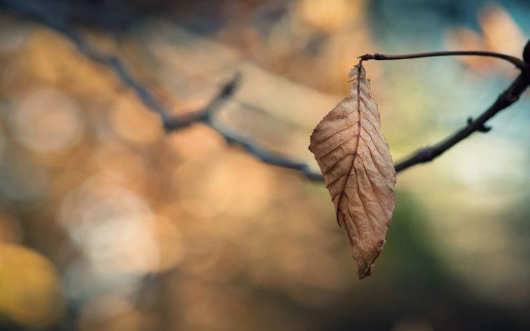 Одинокий лист
