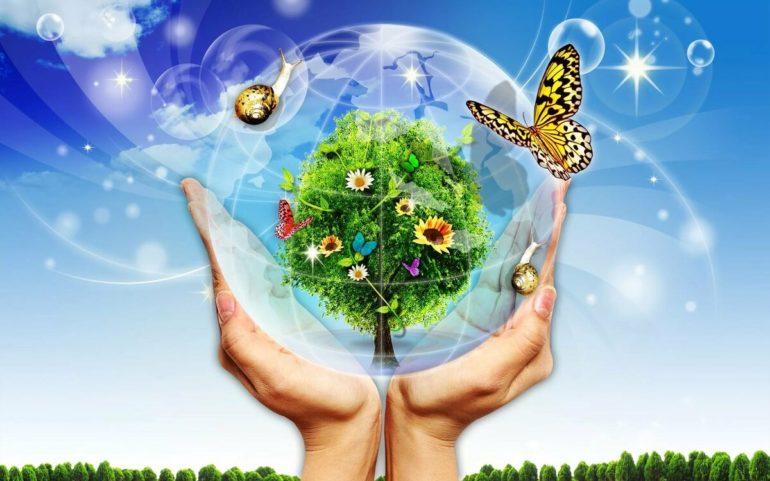 Дидактические игры по экологии для дошкольников