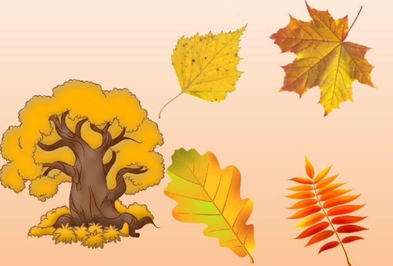 Дидактическая игра «Листья»