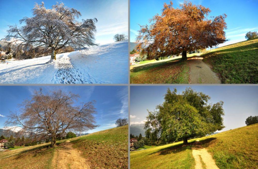 Одинаковый пейзаж в разные времена года