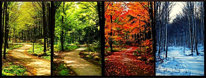 Лес в разные времена года